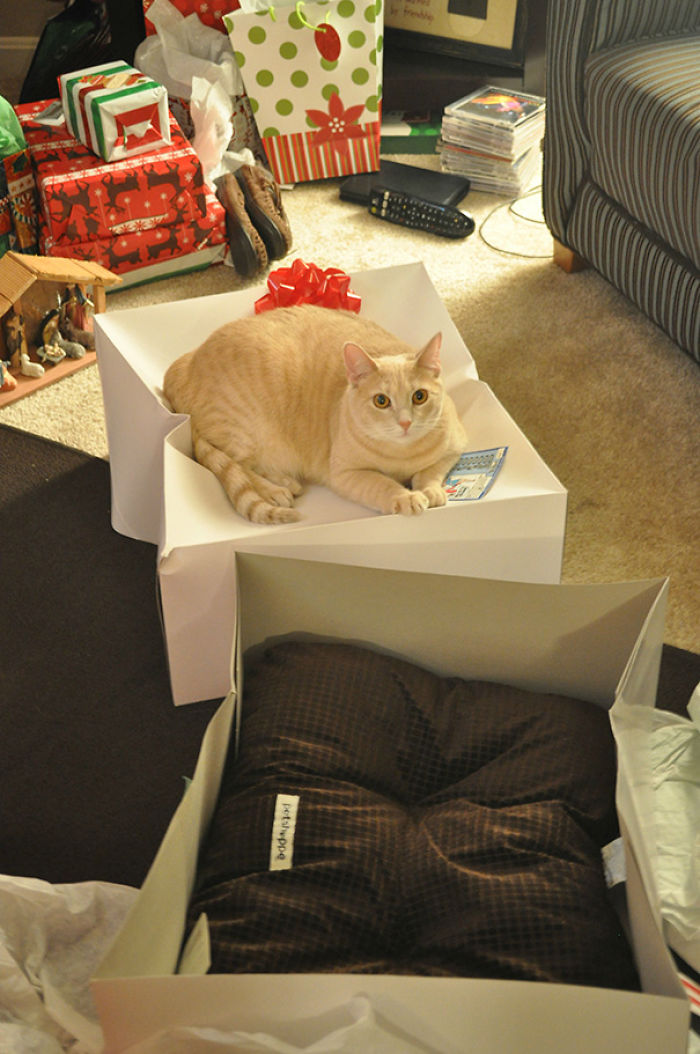 Got My Cat A Bed For Christmas