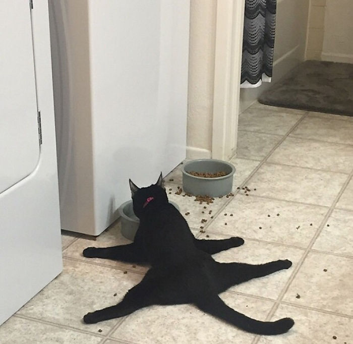 This Is My Friends Cat Eating Dinner
