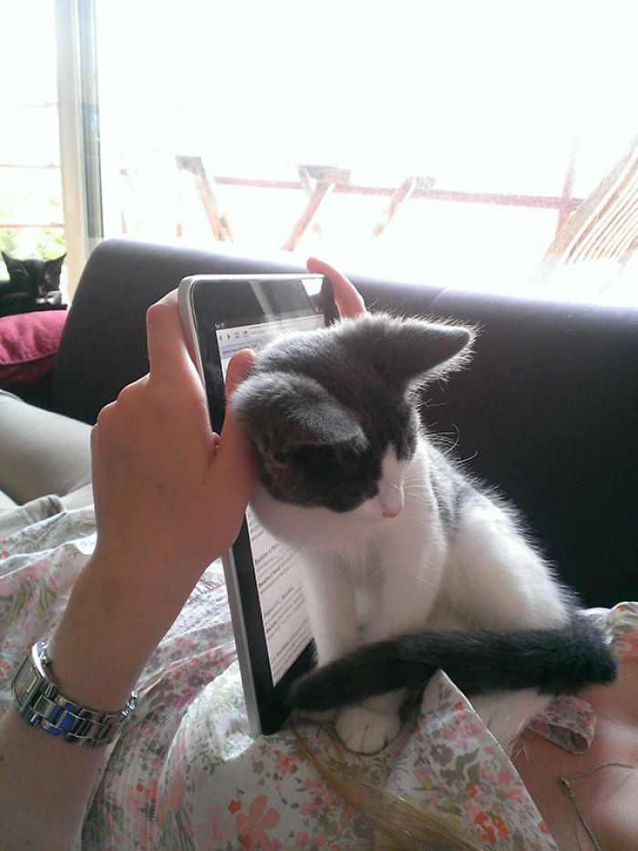 Stop Using That iPad. I Want Attention!