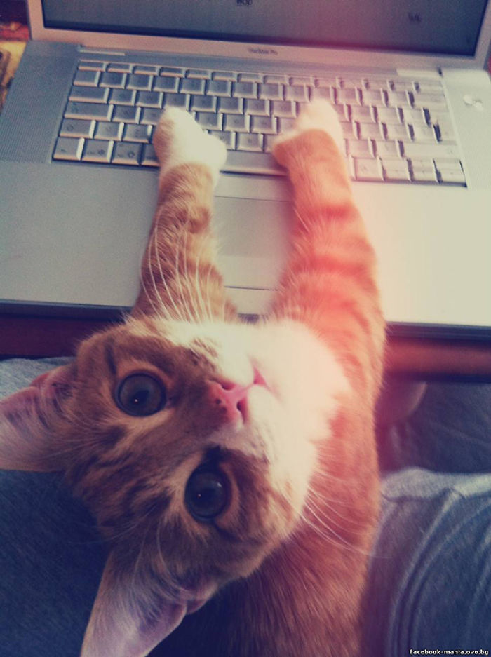 On The Internet Nobody Knows You're A Cat, Nobody!