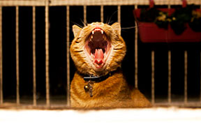 Meet Luccie: My Yawning And Stalking Cat