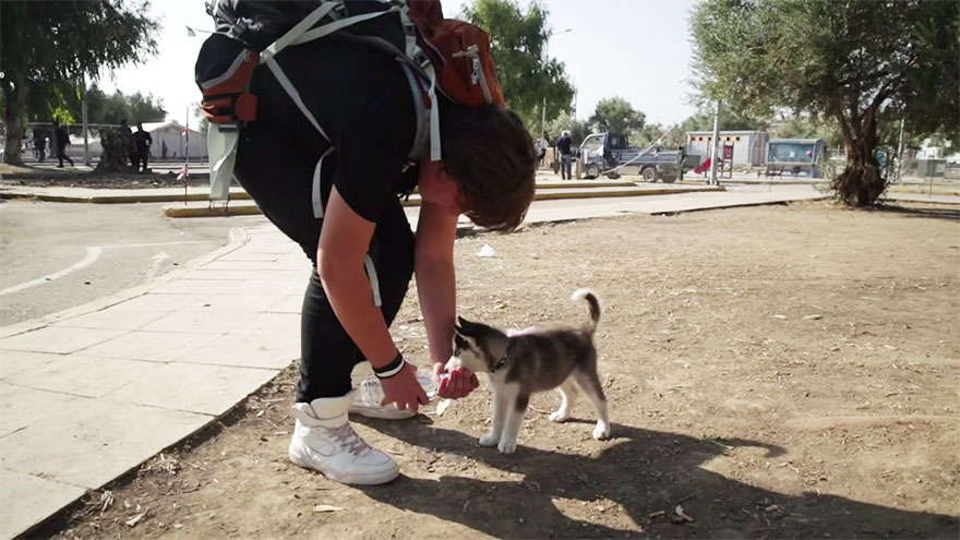 syrian-refugee-aslan-puppy-rose-500-km-greece-lesbos-1