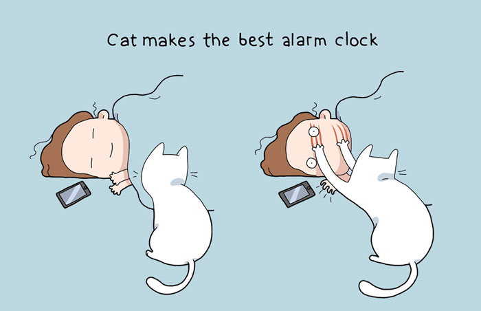 The Reality Of Owning A Cat