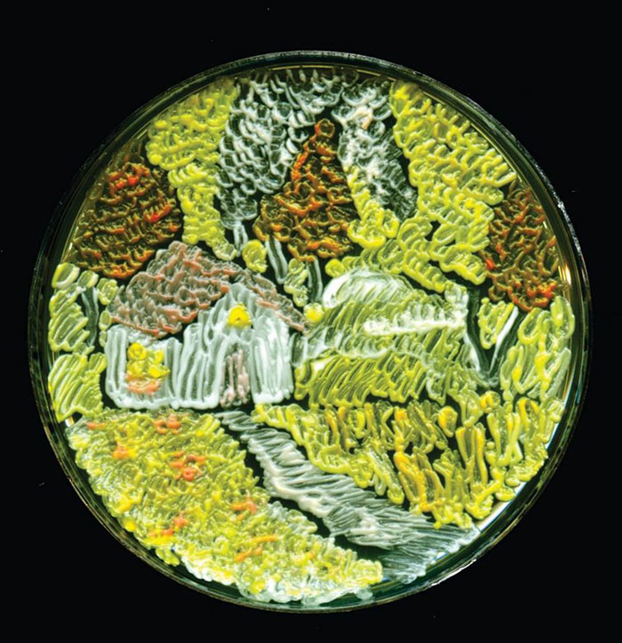 microbe-art-petri-dish-agar-contest-van-gogh-starry-night-american-society-microbiologists-41