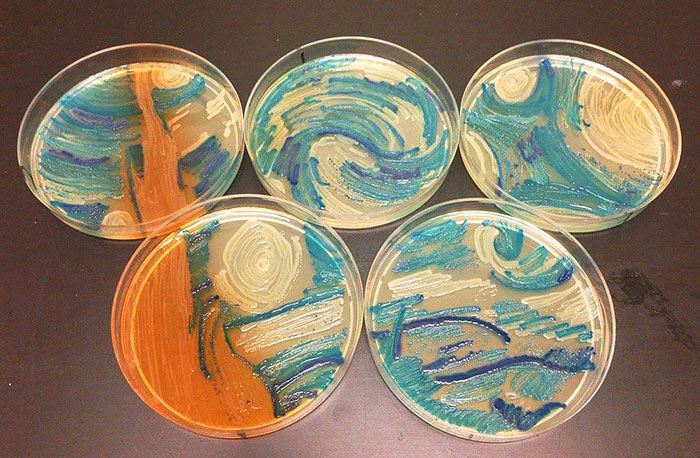 microbe-art-petri-dish-agar-contest-van-gogh-starry-night-american-society-microbiologists-43