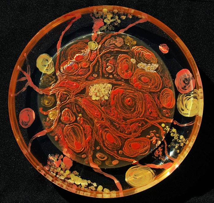 microbe-art-petri-dish-agar-contest-van-gogh-starry-night-american-society-microbiologists-46