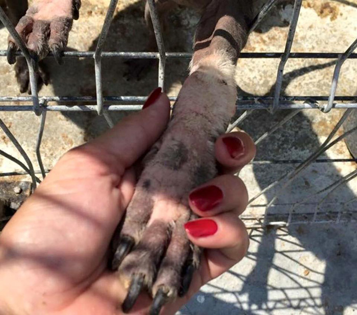 ricky-gervais-tweet-helps-shelter-dogs-romania-k9-angels-15