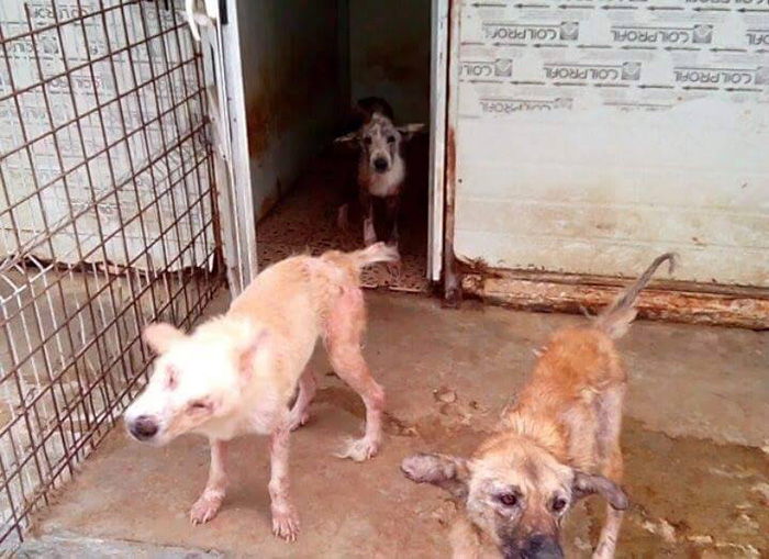 ricky-gervais-tweet-helps-shelter-dogs-romania-k9-angels-18