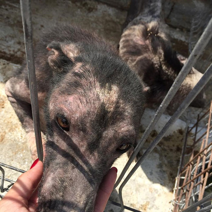 ricky-gervais-tweet-helps-shelter-dogs-romania-k9-angels-26
