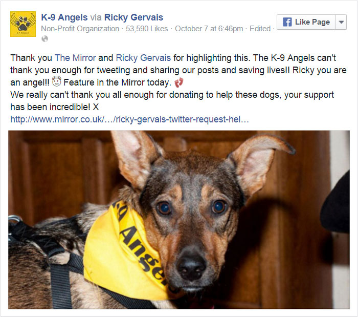 ricky-gervais-tweet-helps-shelter-dogs-romania-k9-angels-36