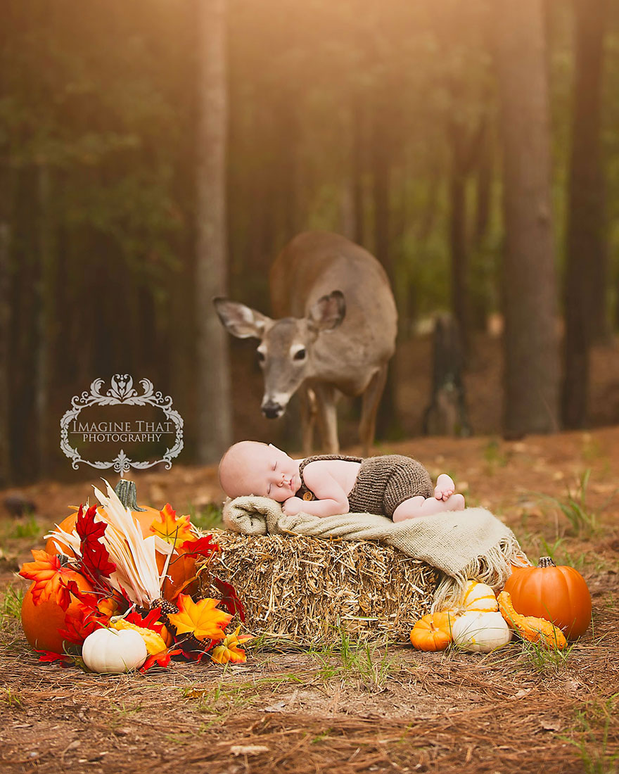 deer-photobombs-baby-photoshoot-maggie-connor-megan-rion-1
