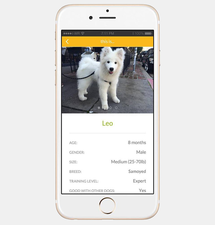 dog-borrow-rental-app-barknborrow-31
