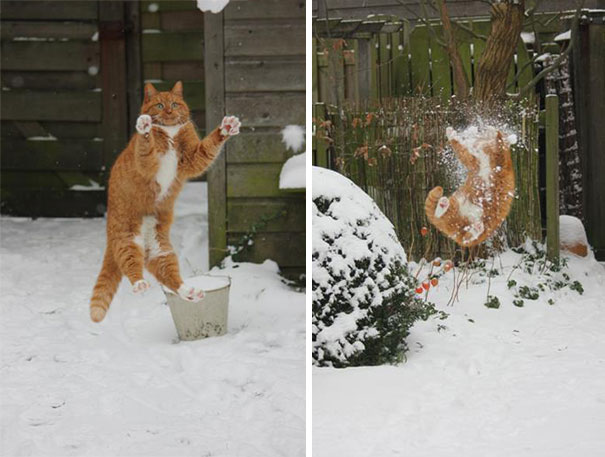 Cat Made A Terrible Mistake