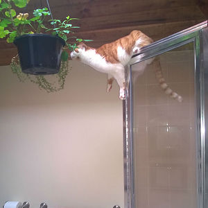 The Girlfriend Was Sure That Hanging Plants Was The Solution To Keep Them Away From The Cat