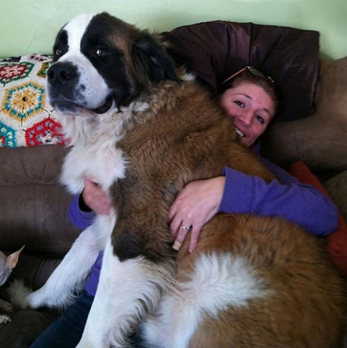 The Perks Of Owning A Big Dog