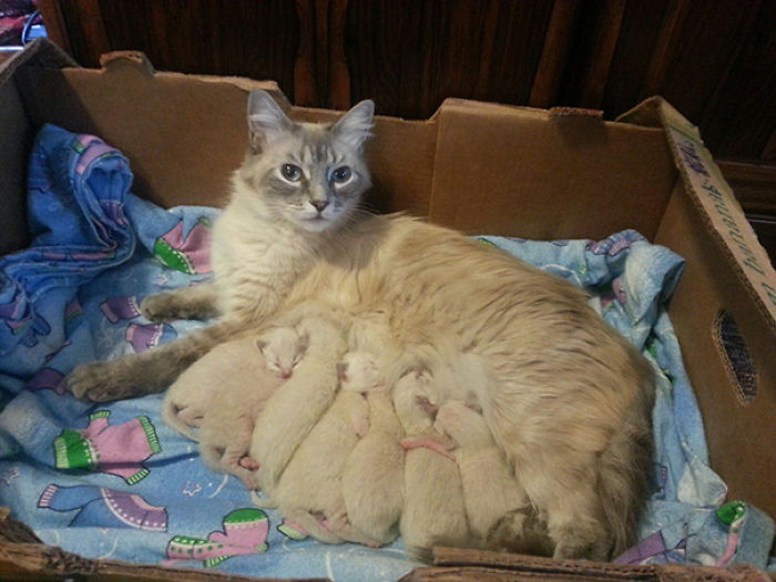 We Brought In A Stray Cat, Two Months Later She Had Babies