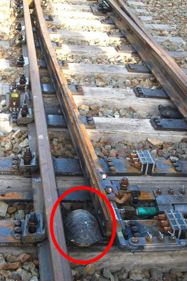 turtle-tunnel-train-track-safety-japan-railways-2