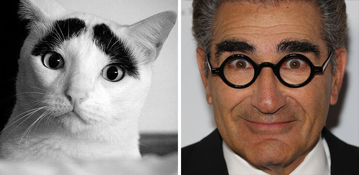 This Cat Looks Like Eugene Levy