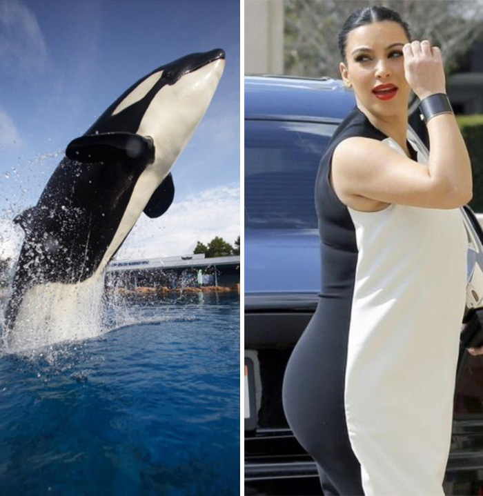 Killer Whale Looks Like Kim Kardashian