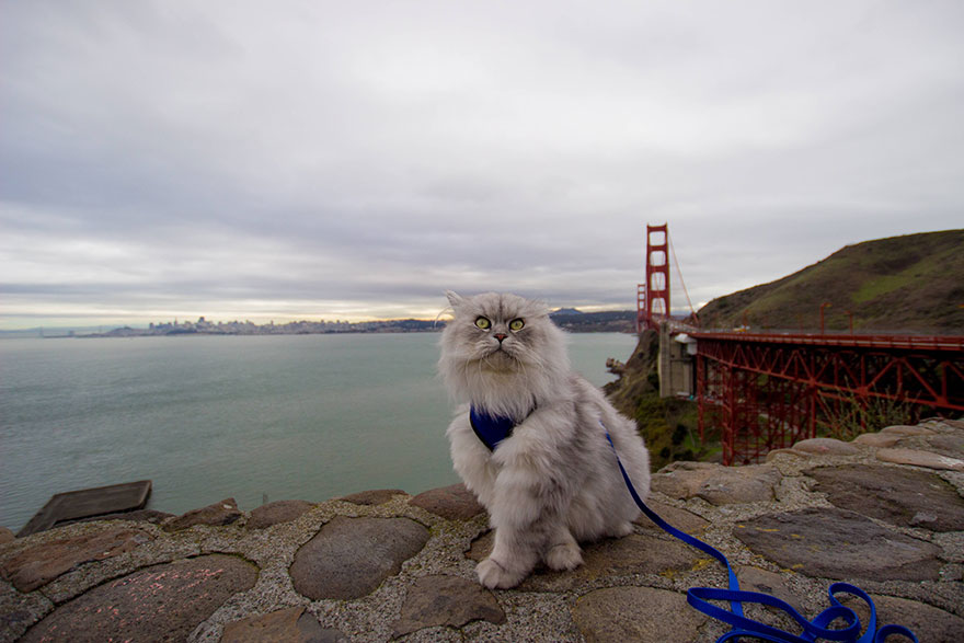 gandalf-cat-travelling-the-world-20