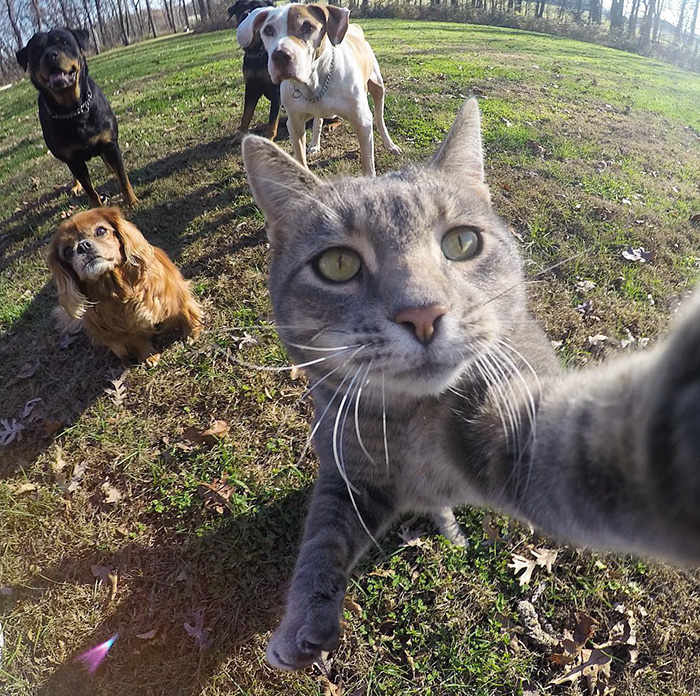 manny-cat-takes-selfies-dogs-gopro-9