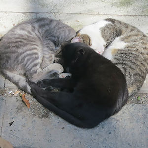 These Cats Were Cuddling In The Shape Of A Heart