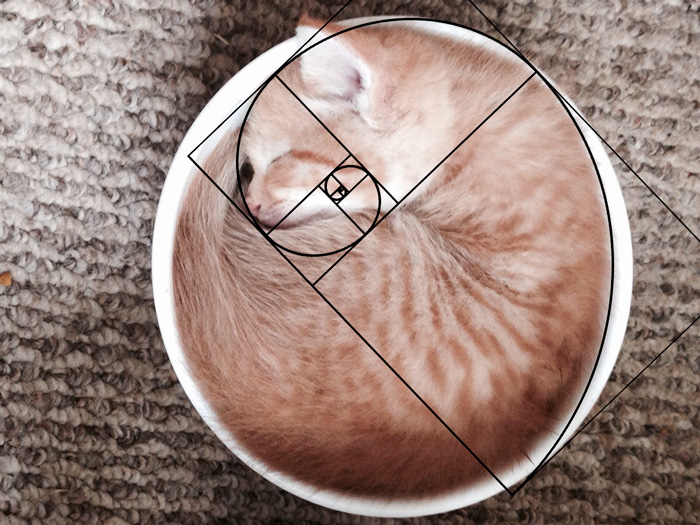 My Kitten Has Been Sleeping In A Bowl To Keep Cool