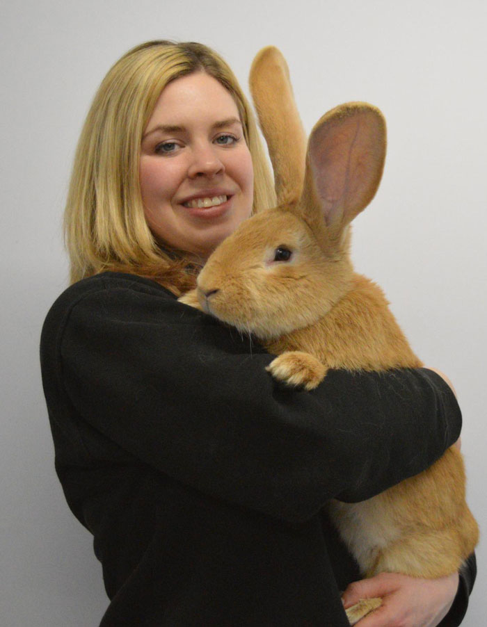 giant-rabbit-atlas-looking-for-home-scottish-spca-7