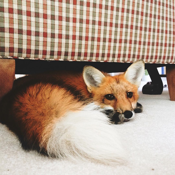 juniper-fox-happiest-instagram-13