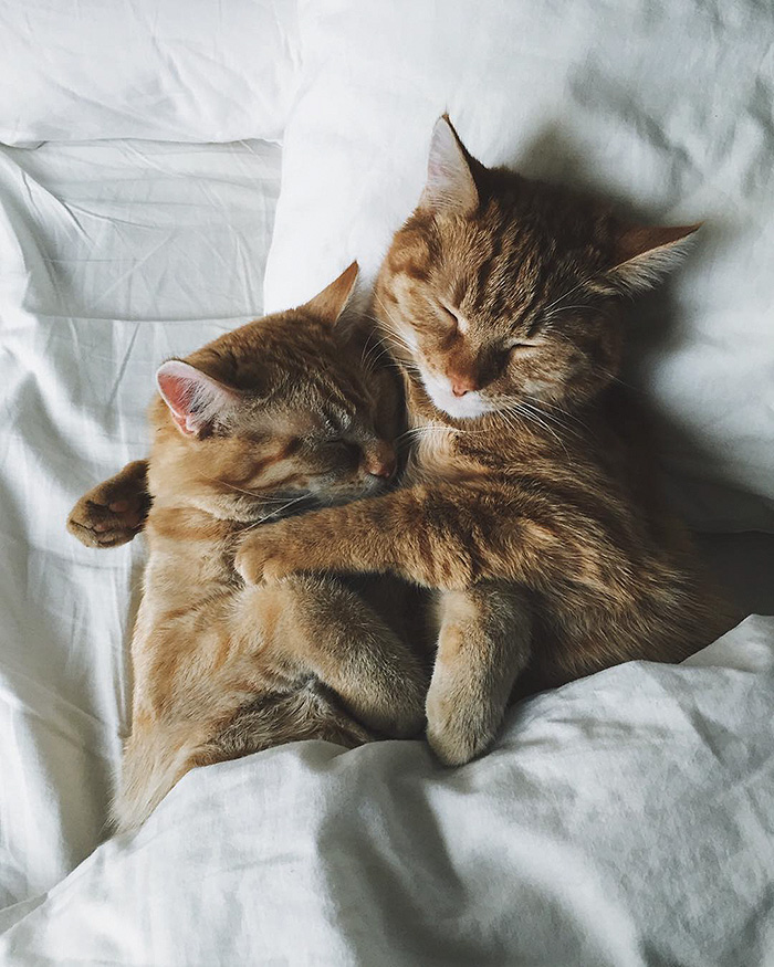 rescue-cats-inseparable-brothers-ginger-anyagrapes-12
