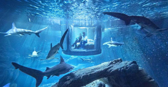Airbnb Have Just Launched Their First Underwater Room And