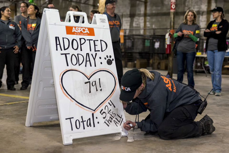 524-cats-dogs-adopted-adoption-event-aspca-15