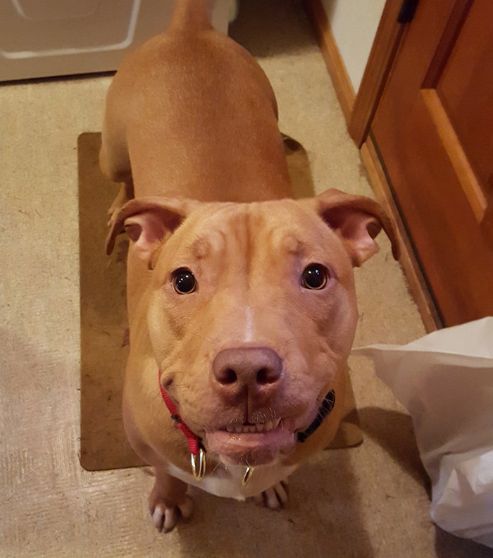 dog-abandoned-by-mother-celebrates-birthday-pit-bull-penny-roofus-and-kilo-7
