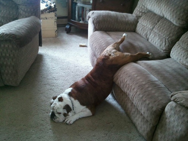 dogs-sit-wherever-they-fit-23