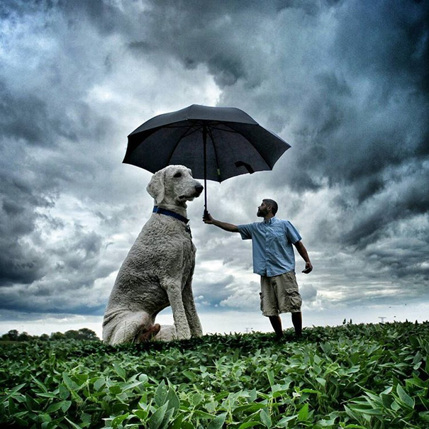 giant-dog-photoshop-adventures-juji-christopher-cline-200