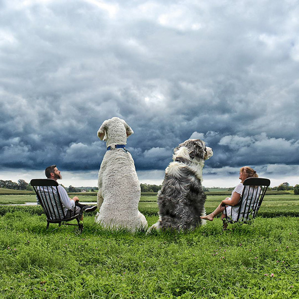 giant-dog-photoshop-adventures-juji-christopher-cline-30