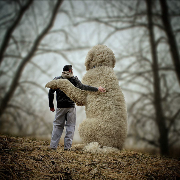 giant-dog-photoshop-adventures-juji-christopher-cline-61