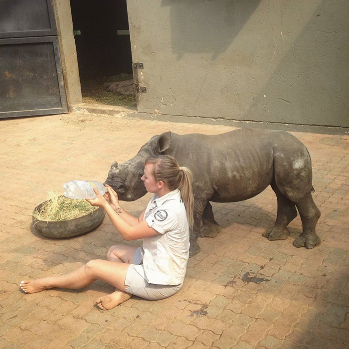 orphan-baby-rhino-sleeps-with-human-kabelo-laure-ellison-orphanage -9