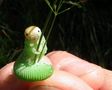 funny-caterpillar-photoshop-battle-27.jpg