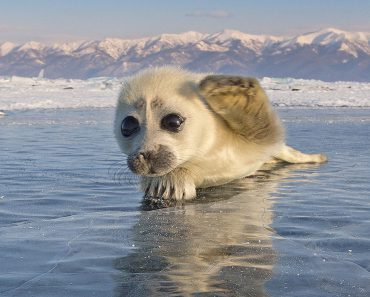 cute-baby-seal-waves-photographer-alexy-trofimov-russia-05a.jpg