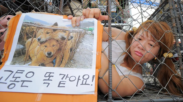 dog-meat-market-shut-down-south-korea-1