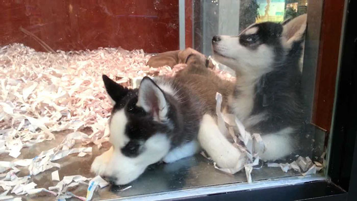 pet-stores-to-sell-rescue-animals-bill-new-jersey-2