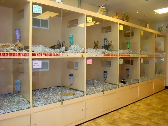pet-stores-to-sell-rescue-animals-bill-new-jersey-6