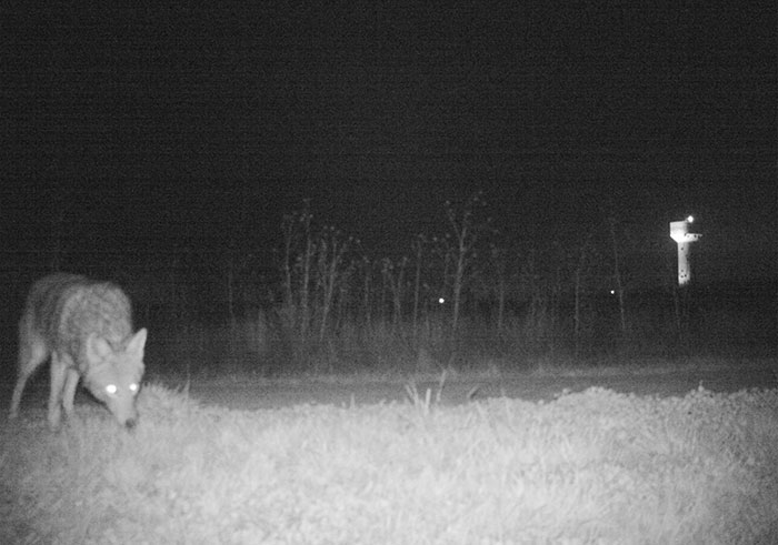 police-camera-find-mountain-lion-kansas-8