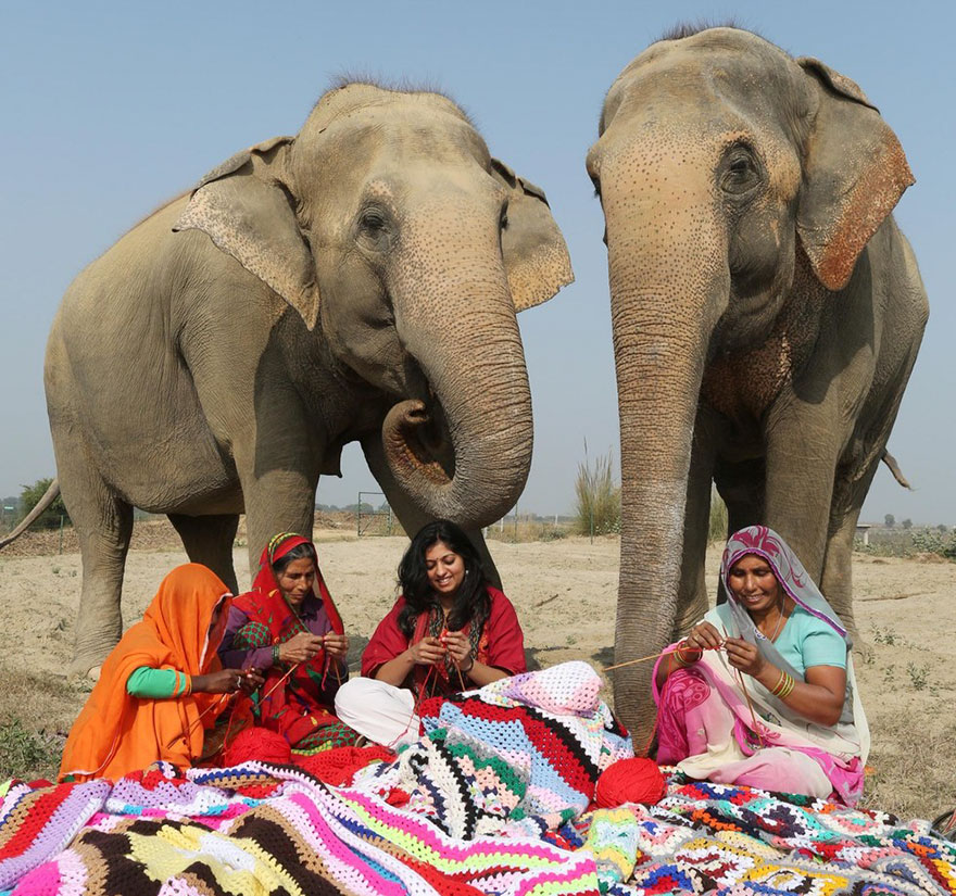 people-knit-giant-sweaters-rescue-elephants-3