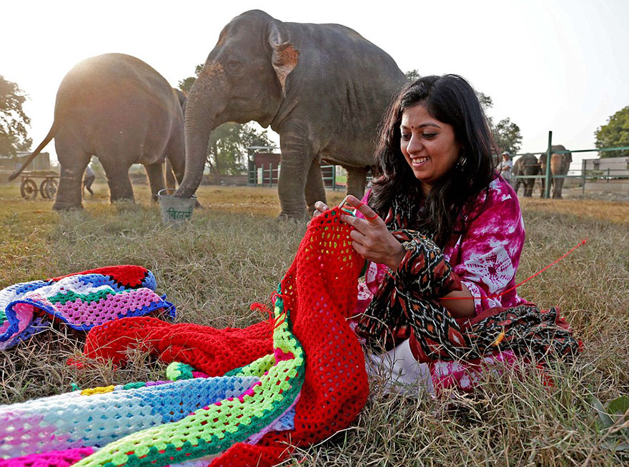 people-knit-giant-sweaters-rescue-elephants-7