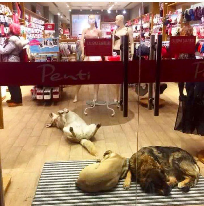 shops-help-stray-animals-istanbul-8