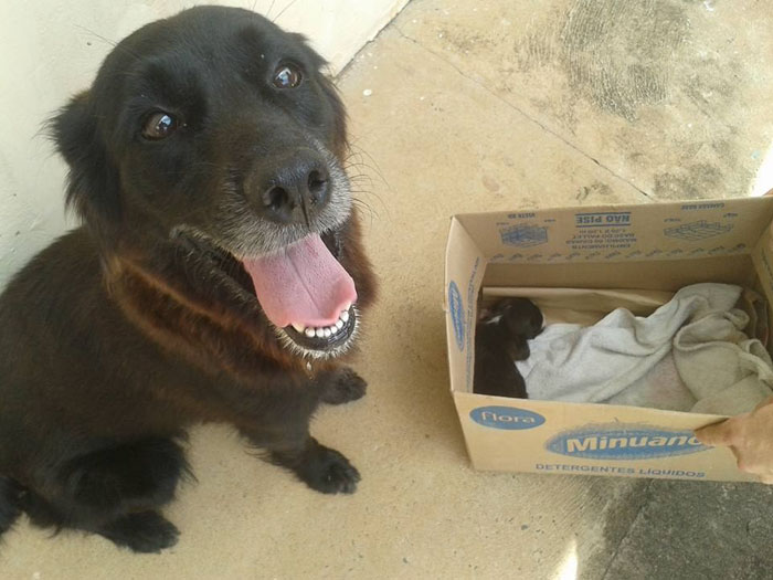dog-digs-trash-rescues-puppy-brazil-4