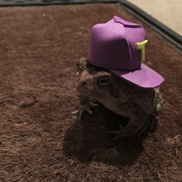 toad-tinny-hat-8