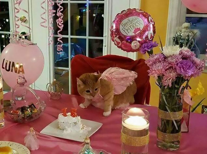 family-throws-cat-quinceanera-party-luna-6